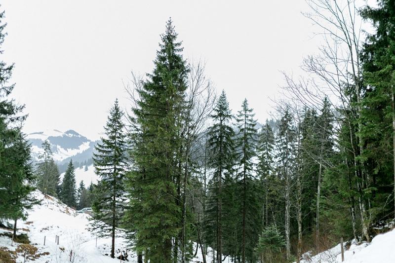 AnjaLinner_winterbraut_styleshoot-115