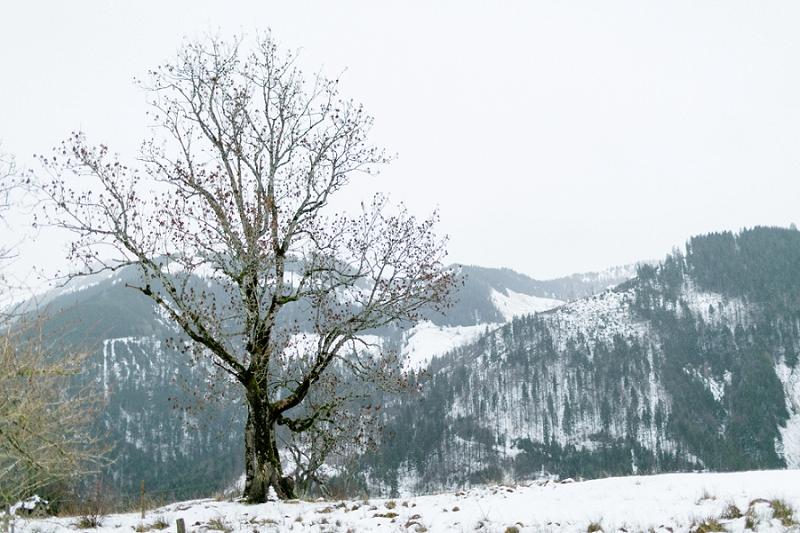 AnjaLinner_winterbraut_styleshoot-159